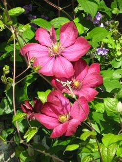 Flowers_809