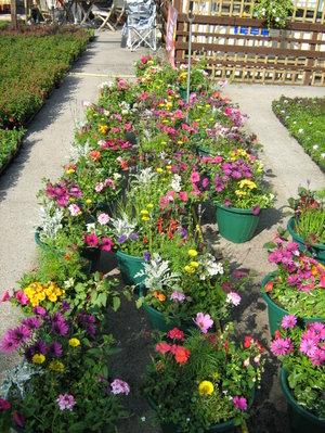 Flowers_895