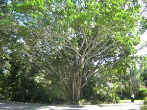Florida_group_3_039