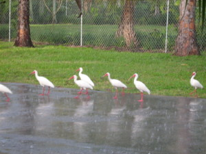 Florida_group_4_085